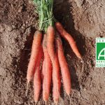 Fort&Vert carotte bio botte