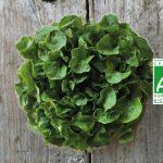 salade bio botte label - Fort & Vert