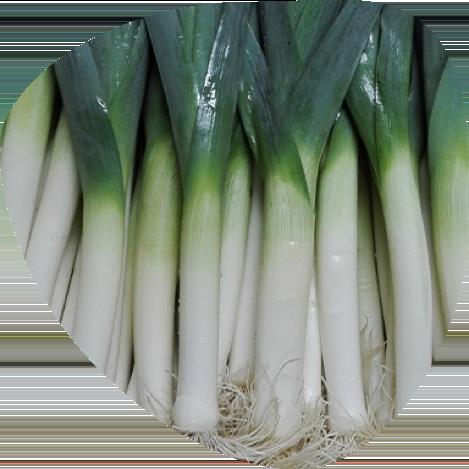 Poireau bio - Fort & Vert