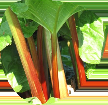 Qualité, fraîcheur et goût des produits- Fort & Vert