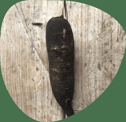 Légumes anciens bio - Fort & Vert
