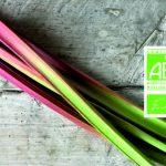rhubarbe-bio