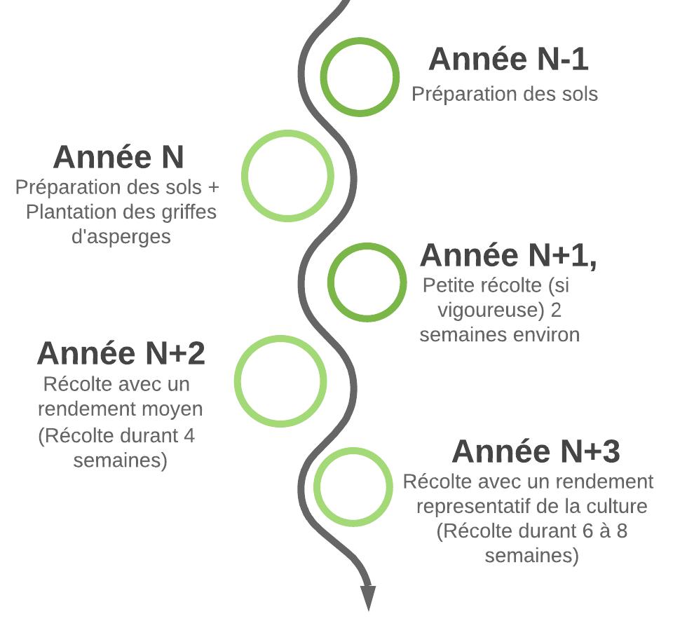 Les-gd-etapes-aspergeraie